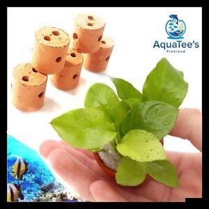 5 x Terracotta Aquarium Plant Pots Aquascape FRESH WATER AQUARIUM FISH TANK