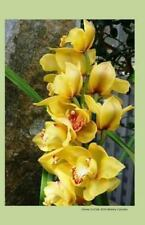 Yellow Orchids 2014 Weekly Calendar : 2014 Weekly Calendar with a Cover Photo...