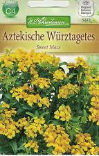 5272 Aztekische Würztagetes 'Sweet Mace' Tagetes lucida Samen