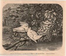 Antique print pigeons owl / Columbidae dove pigeon Piccione / le  Hibou gravure
