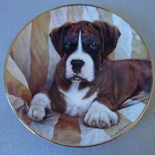 "Danbury Mint fine porcelain plate of Boxer dog ""The Look"" by Simon Mendez"
