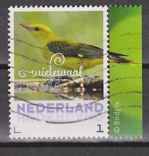 NVPH Nederland Netherlands 3013 used Wielewaal 2013 golden oriole oriol loriot