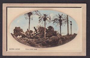 Africa SIERRA LEONE Palm Birds Nests die sunk PPC