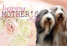 Bearded Collie Dog C5 Gloss Mothers Day Card MBEARDIE-1 paws2print