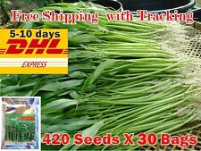 30X 420 Seed Morning Glory Water Thai Chinese Vegetable Garden East Planting Dhl
