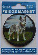 Australian Cattle Dog - Fridge Magnet - Welsh Slate