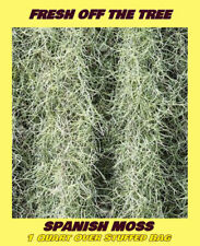 1 Qt. Fresh Florida Live Spanish Moss Air Plant Decorative Garden Craft Basket
