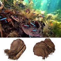 50pcs Natural Catappa Leaves Almond Leaf Fish Cleaning Treatment Aquarium Tank