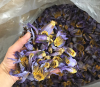 Dried Blue Lotus Flowers Nymphaea Caerulea Nuciferine Herbal Tea Smoke 10 Grams