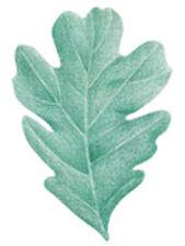 Oak Leaf 25 Green Leaves Wallies Wallpaper Cutouts Package Decals Stickers Mural