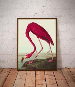 Flamingo Natural History print - various sizes