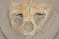 Fossile de crâne de tortue marine Testudo du crétacé de Kourigba/ turtle skull