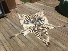 Taxidermy Tanned Zebra Complete Hide{Possible Mount} Africa Safari Hunting Decor