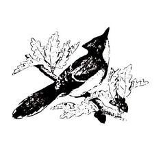 Blue Jay unmounted bird rubber stamp, Autumn #9