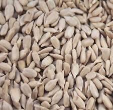 20kg Premuin Sunflower Hearts - Bakery Grade Kernels - Wild Bird Food