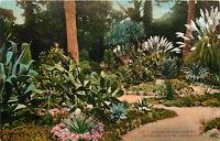 DB Postcard CA C480 Arizona Cactus Garden Hotel Del Monte California Mitchell