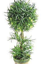 Podocarpus Kugel Buchsbaum  H 46cm Topfpflanzen Bonsai Dekobaum Kunstpflanzen