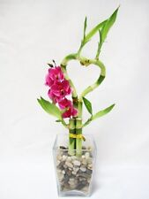 Live Heart Style Lucky Bamboo Arrange w/ Glasses Vase Pebble Orchid Decor Gift
