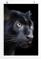60x90cm Tierfotografie – Schwarzer Panther mit dunklem Hintergrund