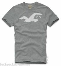 HOLLISTER Gray Shirt Men's Small S NeW Soft Cotton Short Sleeve SEAGULL T-Shirt