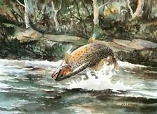 Rolling Brown Trout in Stream by W J Schaldach