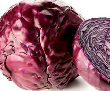 Red Cabbage Seeds, Red Acre, Heirloom Cabbage Seeds, Non-Gmo Cabbage Seed, 100ct
