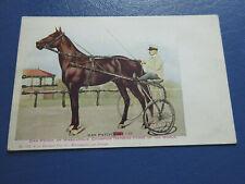 1908 Postcard Champion Dan Patch Horse, with Sparkles Postcard