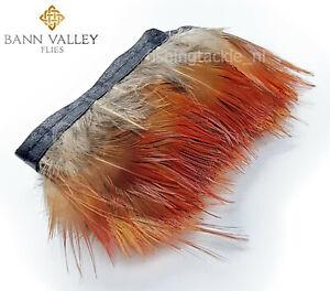 Gordon Griffiths Golden Pheasant Head Complete Grade 1 in 4 Colours