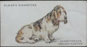 No.3 ROUGH COATED BASSET HOUND - Dogs by Wardle (Full Length) John Player 1931