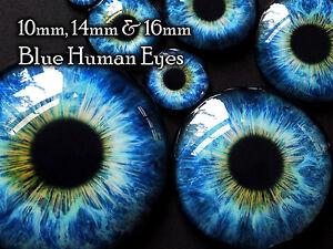 Taxidermy Glass Dragon, Doll, Teddy Eyes, Human Blue 10mm, 14mm, 16mm