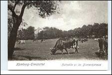 HAMBURG EIMSBÜTTEL anno 1904 Kuh-Weide a.d. Bismarck-Strasse Reprint-Postkarte