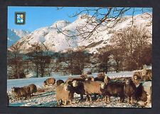 View of Herwich Sheep in the Langdale Valley. Stamp/Postmark - 1988