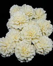 25 New Carnation white Sola Wood Diffuser Flowers 5 cm Dia.