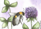 ACEO Limited Edition - Bee and Clover print of Original Pen & Ink