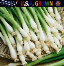 Tokyo Long White Bunching Green Onion Seeds (500 Seeds) Heirloom Gardening
