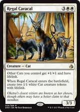 Regal caracal