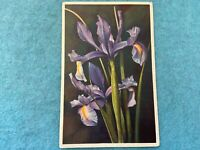 Iris Hispanica Hort Vintage 1944 Flower Postcard