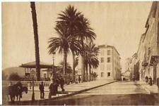 Avenue de Costebelle PALMIERS HYERES 7.25 x 11 Albumem? Antique Photo FRANCE