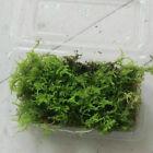 Natural Aquarium Moss Live Green Grass Aquatic Plant Fish Tank Garden Yard Decor