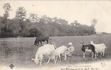 SCENE DU CENTRE 544 pastorale du Centre chèvres vache en champs timbrée 1903