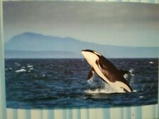 NEW POST CARD STRAIT OF JUAN DE FUCA SOUTHERN RESIDENT ORCA  SAN JUANS  WA