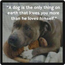 Dog Pitbull That Loves Refrigerator Magnet