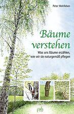 Was Wurzeln, Laub, Stamm & Äste über einen Baum verraten. Die Sprache der Bäume!