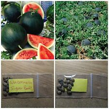 Watermelon ''Sugar Baby'' ~15 Top Quality Seeds - Early - Amazing Variety!