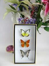 3d - 3 echte exotische Schmetterlinge im Schaukasten Bilderrahmen Taxidermy 21