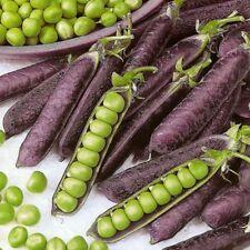 Purple pea seeds 10 seeds Pisium satirum Delicious Vegetable Seeds C158