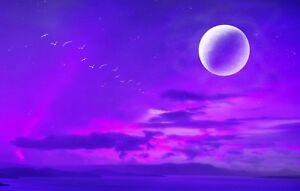 Fantasy Moon - Purple And Pink Sea Birds Landscape Wall Art Canvas Pictures