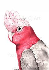 Original Watercolour Galah Painting - australian bird art pink cockatoo