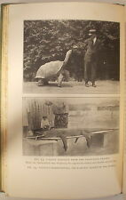 1926 HABITS & ADAPTATIONS OF REPTILES & AMPHIBIANS by THOMAS BARBOUR tortoise
