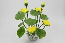 10Pcs Seeds Bowl Lotus Hydroponic Plants Aquatic Flower Water Lily Home Garden